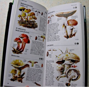 Inner pages of Mushrooms and Toadstools