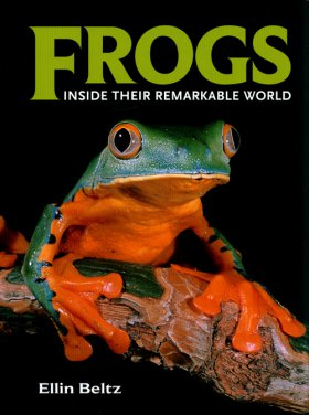 Front cover of Frogs by Ellin Beltz