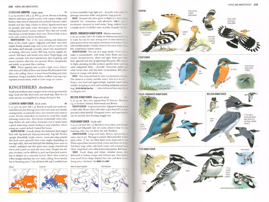 Sample page from Collins Bird Guide by Lars Svensson