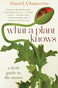 Front cover of What A Plant Knows by Daniel Chamovitz