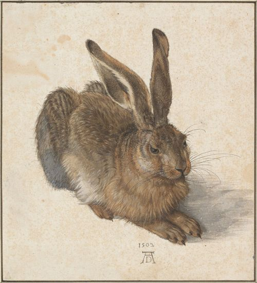 Young Hare (1502) by Albrecht Dürer
