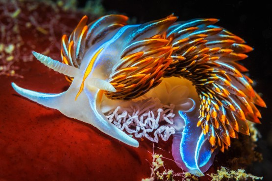 Colorful image of a sea-slug