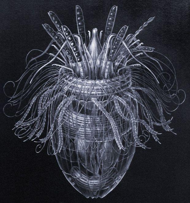 Marine Loriciferan Pliciloricus enigmaticus